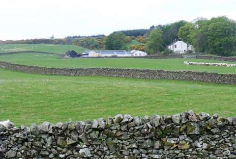 Die wunderschöne schottische Landschaft mit Schafen