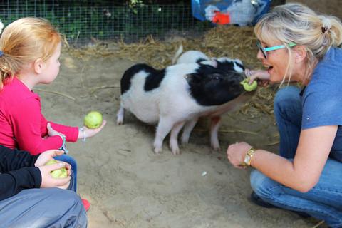 Zu Besuch bei den Mini-Schweinen
