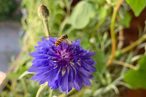 Bienenstarker Besuch