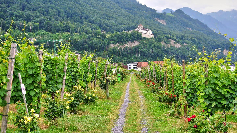 Weinplantage in Vaduz