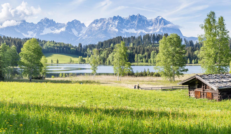 Panorama Wiese und Wilder Kaiser