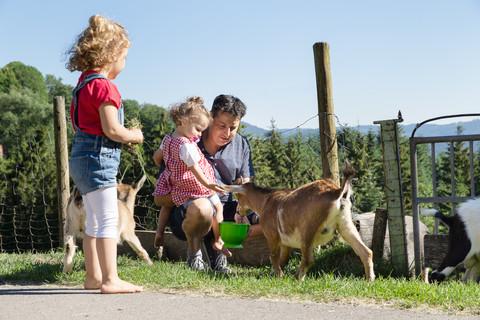 Ziegen füttern und streicheln