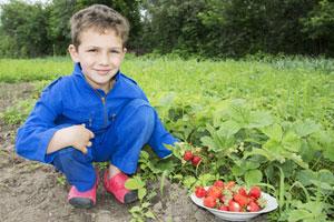 Die Erdbeere – wunderbare Frucht von deutschen Feldern