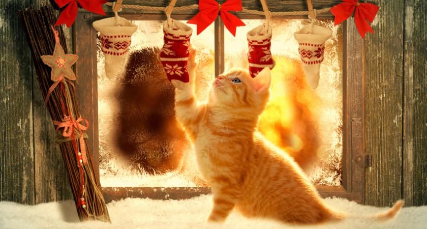 Zauberhafte Weihnachtsferien auf dem Bauernhof erleben