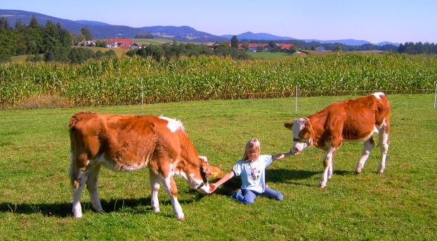 Kälber auf dem Bauernhof Gründinger.jpeg