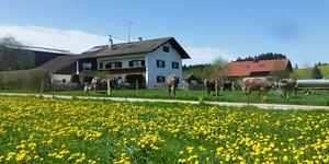 Ferienhof Klöck Frühlingsangebote