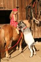 Pony, Ziege und Kinder auf dem  Bauernhof Gründinger