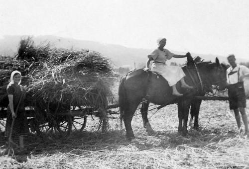 Ferien auf dem Bauernhof (Teil 1) – Auszeit mit Tradition und viel ...