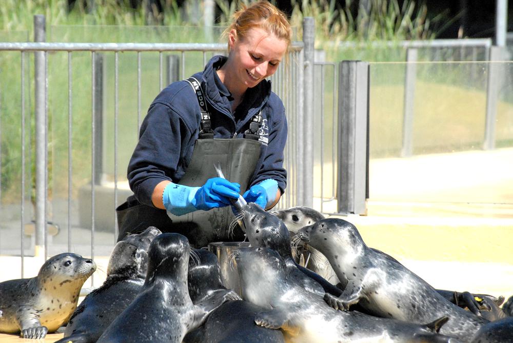 Fütterung der Seehunde - © Seehundstation Norddeich