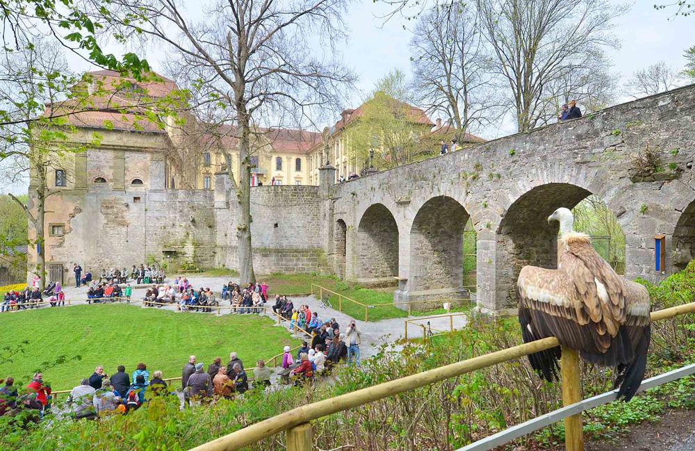 Der beobachtende Falke - Falkenhof Schloss Schillingsfürst
