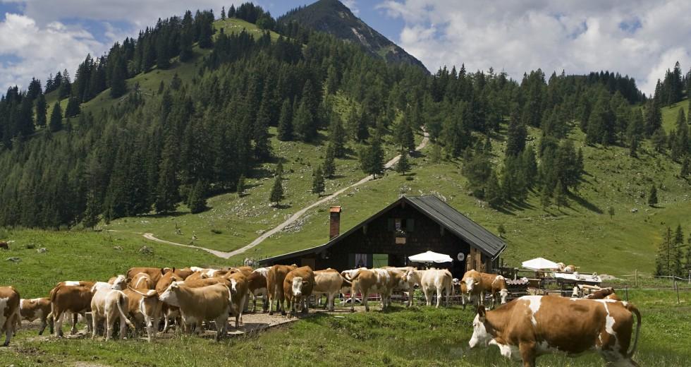 Natur und Erholung pur erleben im Bauernhofurlaub in Süddeutschland