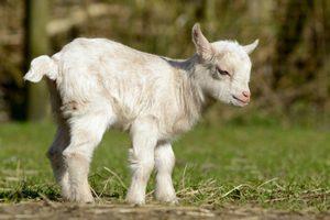 Tierkinder – Frühling auf dem Bauernhof