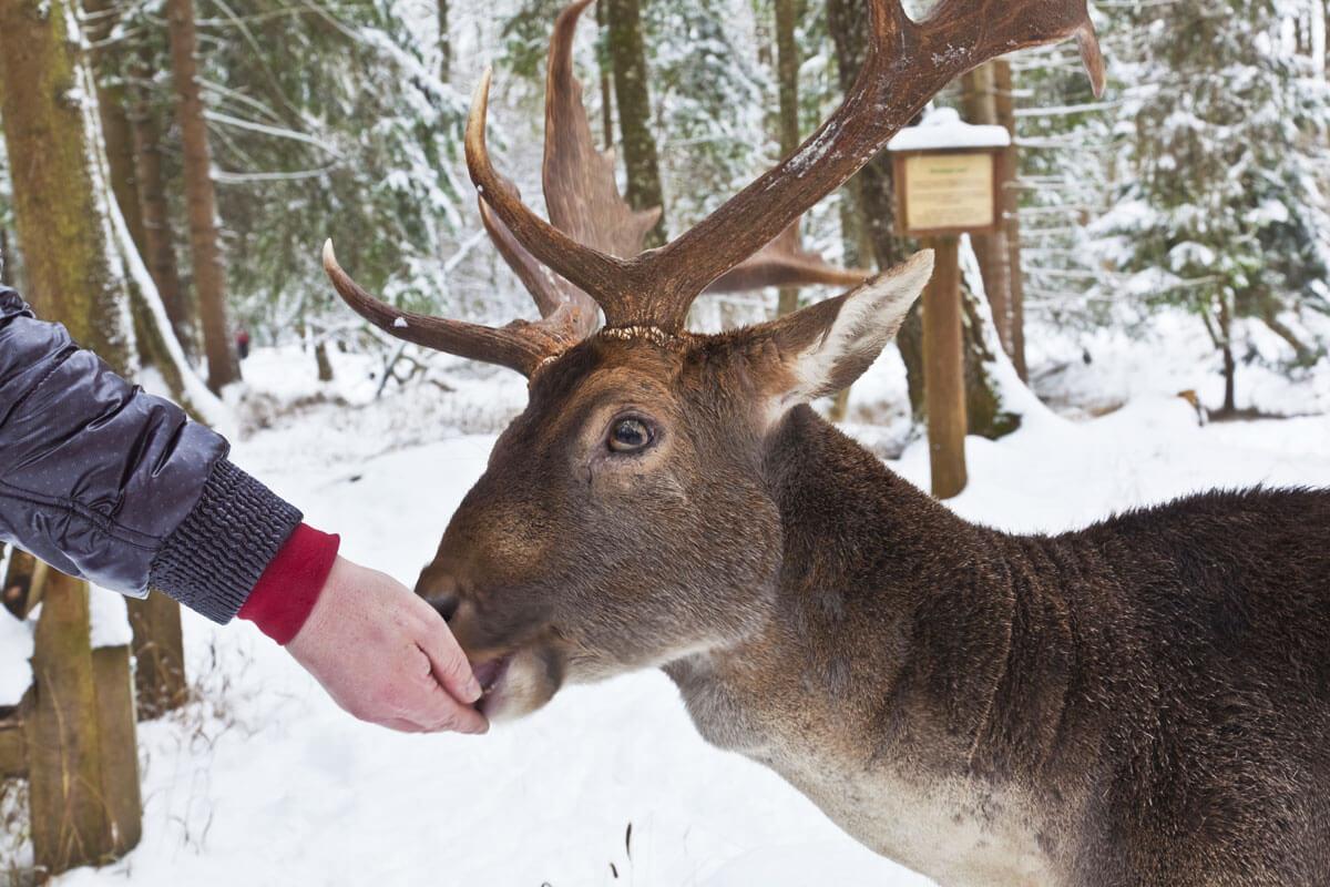 Dein perfekter Bauernhoftag auf dem Forsthof - Damwild im Winter