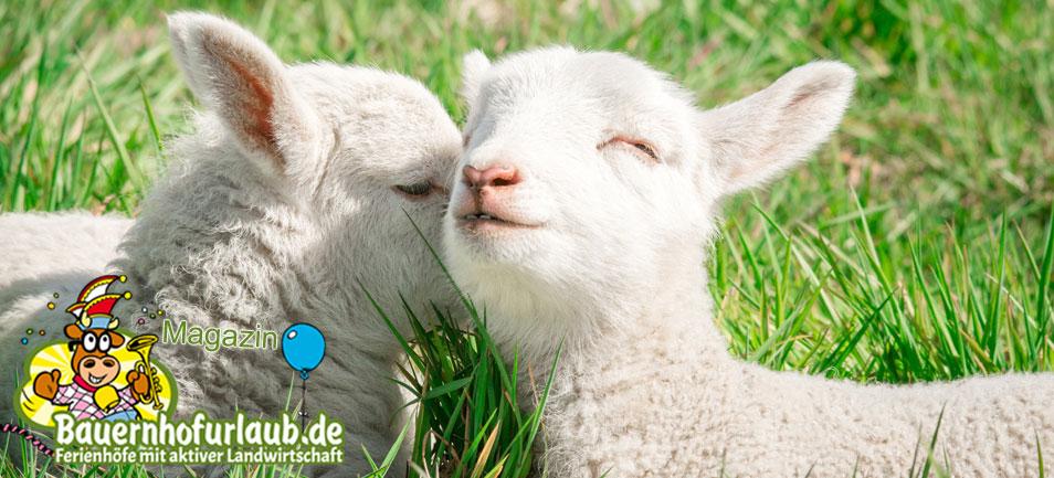 Bauernhofurlaub.de Magazin