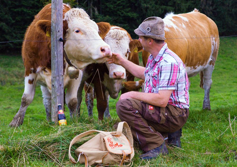 Besuch bei den Kühen auf der Alm