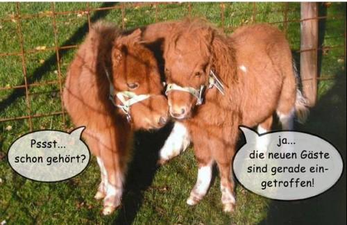 Sprechende Ponies