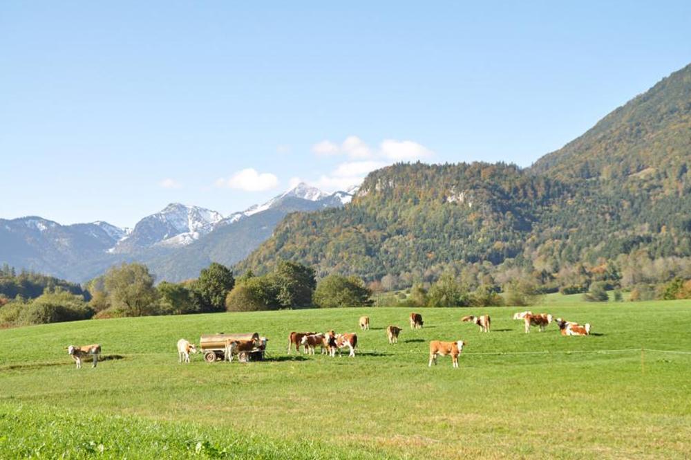 Die herrliche Umgebung des Donauerhofs im Chiemgau