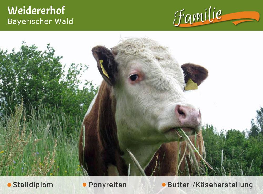 Weidererhof - Jubiläumstipp